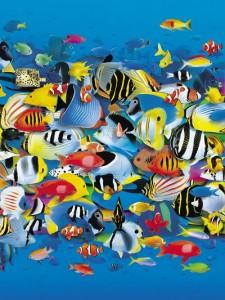 Много рыб - как много людей